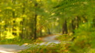 HD DOLLY: Winding Forest Road