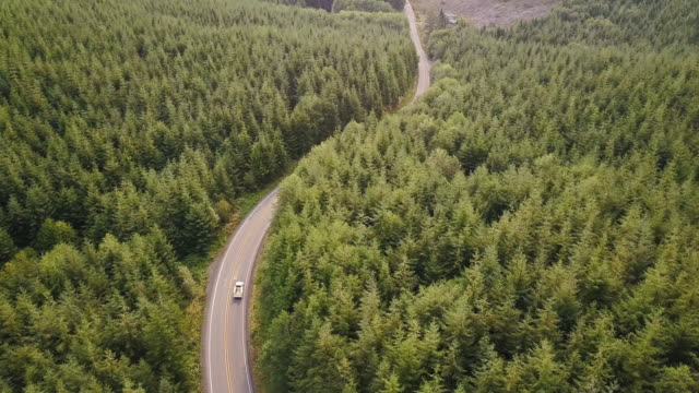 Winding Road Through Managed Forest in Pacific Northwest - Aerial Shot