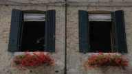 MH LA LD Windows with Flower Boxes / Venice, Italy