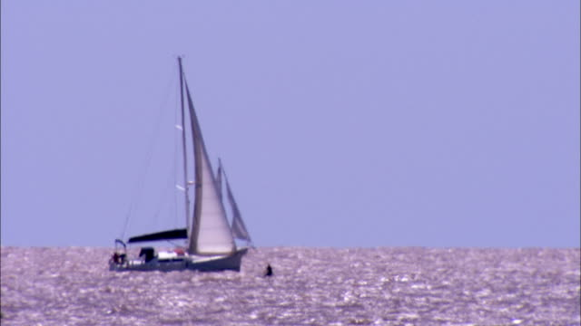 A windsurfer floats among several sailboats in choppy waters. Available in HD.