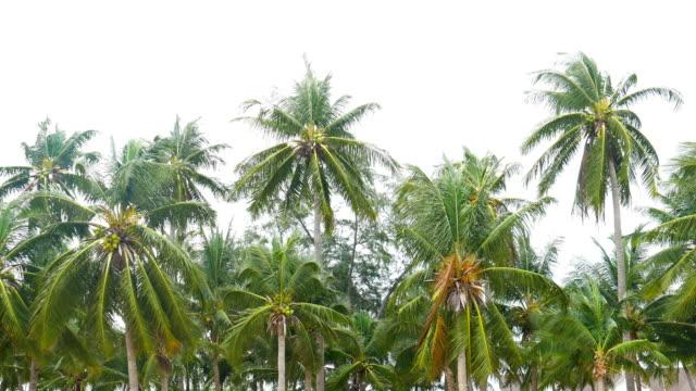 Windy gegen die Palme am Strand, Bang Saen Beach, Thailand