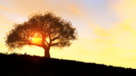 TREE - windy hill-sunset (loop)