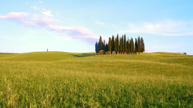 DS Windy meadow surrounding cypress trees
