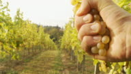HD: Winegrower Squeezing Grapes