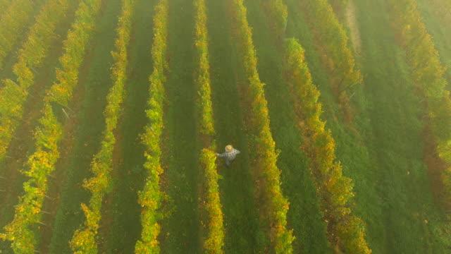 AERIAL Winegrower Walking In The Vineyard