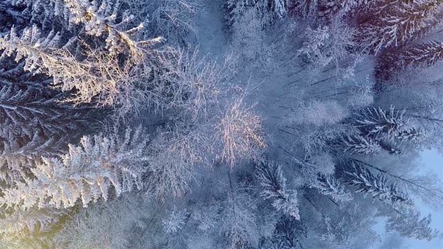 Winter aerial views in snowy forest
