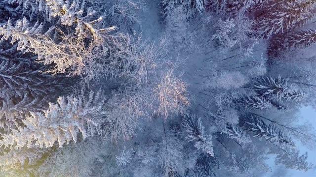 Inverno Vista aerea di foresta innevata