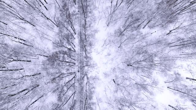 Winter-Wald-Luftaufnahme