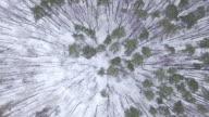 Foresta invernale-veduta aerea