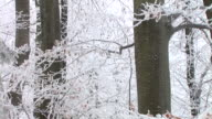 HD: Winter foresta
