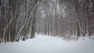 Winter Forest with snowfall