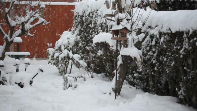 Winter Garden - HD Video
