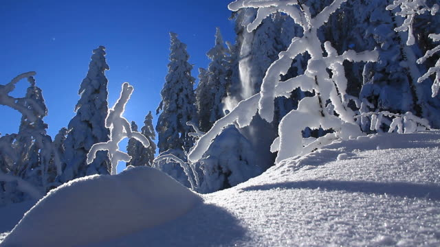 winter landscape in mountains, snow falls from tree, snow and ice particles floating in air