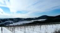 winter of grape field