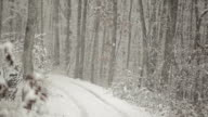 Winter Snow Storm, Forest and Path