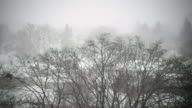 Winter storm with heavy snowfall in Toronto city, Canada