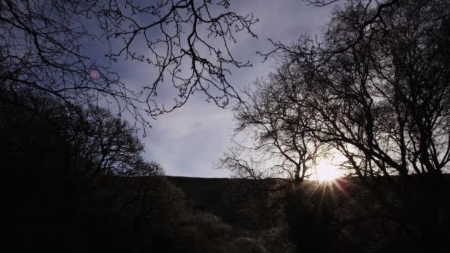 Winter sunrise over woodland, Powys, Wales