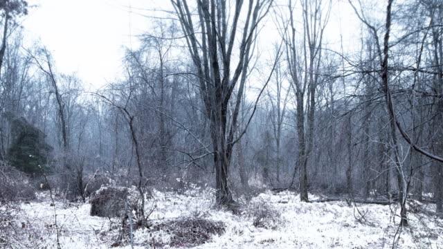 Winter Trees 4