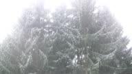 HD: winter