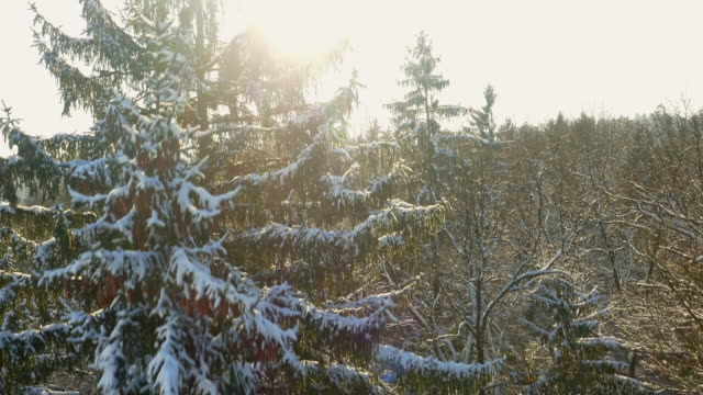 Luchtfoto winterse bos bij dageraad