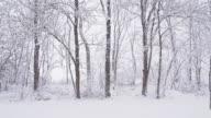 SLO MO Foresta invernale