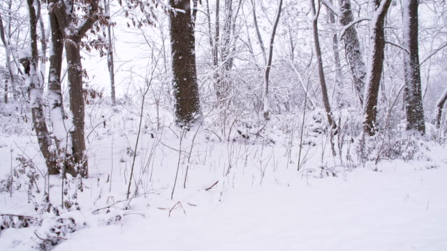 SLO MO Wintry Woods