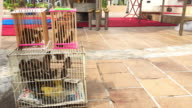 Wishing Birds At Buddhist Temple