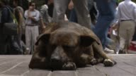 With at least a quarter million mutts roaming Chile's capital even dog lovers admit that strays have become a major problem Santiago Chile