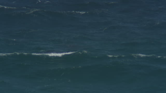 PAN with large group of Bottlenosed Dolphins swimming in profile and visible underwater