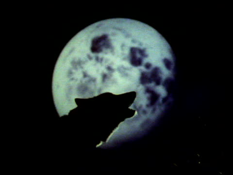 Wolf howls in front of moon at night