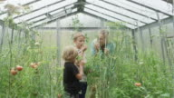 Woman and children in the greenhouse. Biology lesson