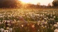 SLO MO DS Woman blowing the dandelion seeds on a meadow at sunset