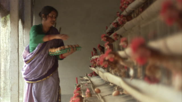 MS, SELECTIVE FOCUS, Woman collecting eggs from caged hens, Mawna, Bangladesh
