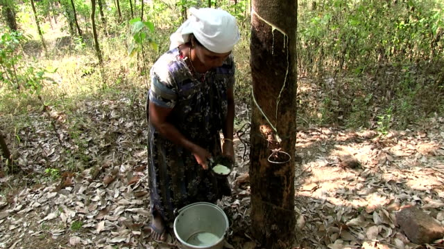 Woman extracts raw rubber from a tree.
