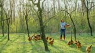 WS-Frau Fütterung Hühner
