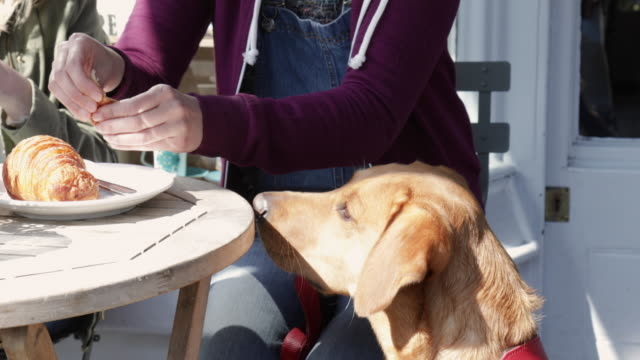 Woman feeds labrador dog a little piece of her croissant, sitting in outdoor cafe.