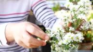 Vrouw bloemist werken bloemen, 4k(UHD)