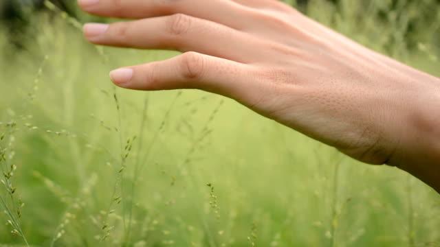 Woman Hands in Grass
