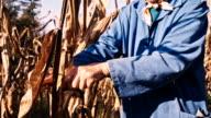 MS Woman Harvesting Corn