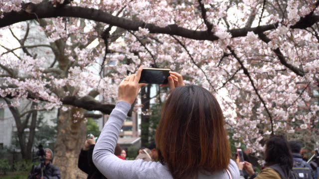 Woman holding smart phone with Cherry Blossom.