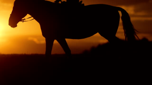 Woman is horseback riding to the horizon at sunset