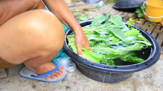 Frau Waschen Gemüse ist aus Bio-Baumwolle