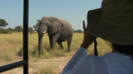 MS, PAN, Woman photographing elephant (Loxodonta africana) in savanna, Botswana