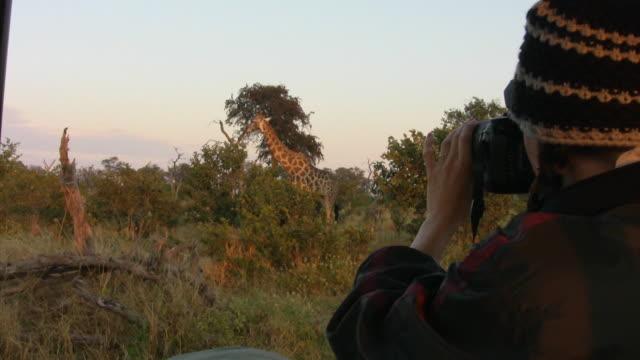 CU, Woman photographing giraffe (Giraffa camelopardalis) in savanna, Botswana