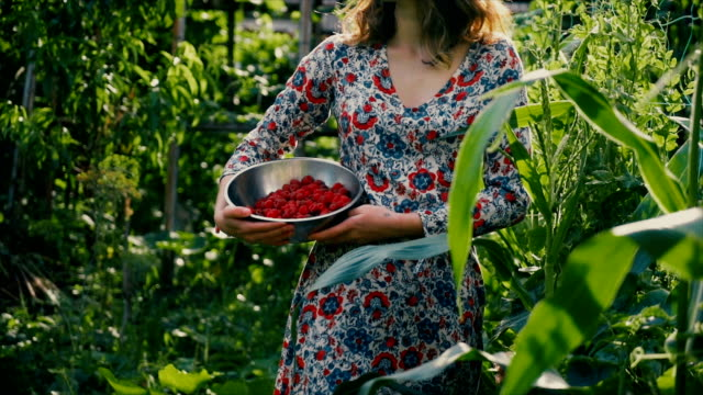 Woman picking raspberry in the countryside