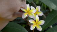 A woman picks and smelling a Frangipani flower