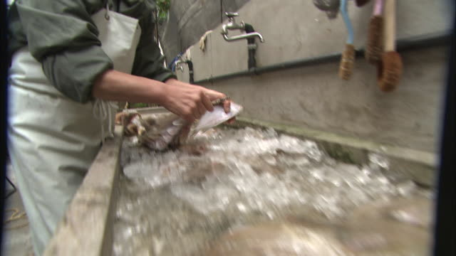 A woman pulls a string through several flounders over a bin of ice.