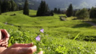 Woman relaxes in mountain meadow, detail of hand amongst wildflowers