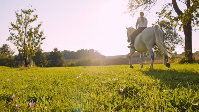 SLO MO Woman riding horse in meadow
