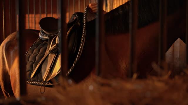 SLO, MO, DS Frau Sattelns einem Pferd in stabiler